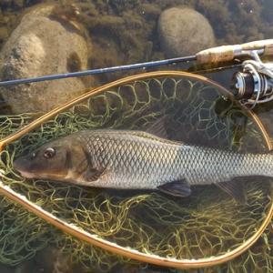 利根川冬季ニジマス釣り場その2