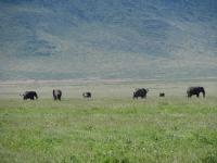 ンゴロンゴロ自然保護区(2) ~タンザニア旅行のすすめ(24)~
