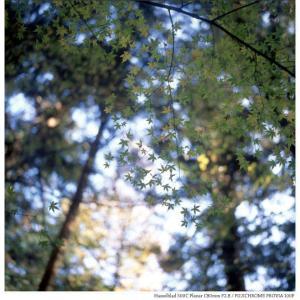 File,2028 【Autumn~廻る季節】 Hassel Blad 500C / FUJICHROME PROVIA100F