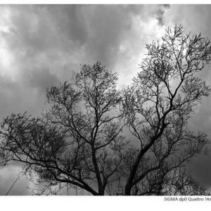 File,2045 【Winter again~灰空】 SIGMA dp0 Quattro