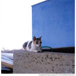File,2131 【Cat~佐柳島】Hassel Blad 500C / FUJICHROME PROVIA100F