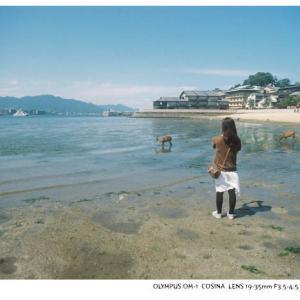 File,2140 【Deer in a sea~宮島】 OLYMPUS OM-1 / Lomography100
