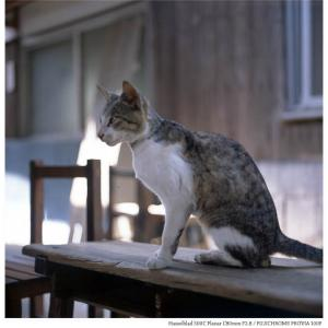File,2143 【Cat isand ~佐柳島】 Hassel Blad 500C / FUJICHROME PROVIA100F