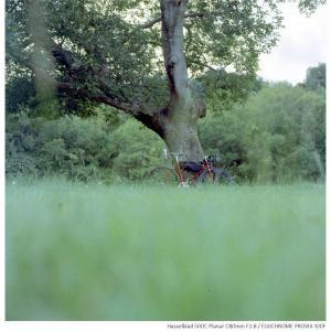 File,2157 【Green forest~緑の日々】Hasselblad 500C / FUJICHROME PROVIA100F