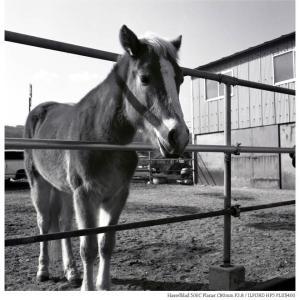 File,2186 【Surprise~瀬戸内の馬】Hassel Blad 500C / ILFORD HP5 PLUS400