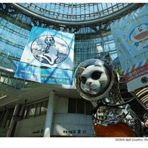 File,1975 【Space cat ~ 宇宙ネコ 】 SIGMA dp0 Quattro