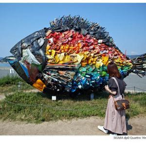 File,1988 【Colorful  Fish~ 淀川テクニック】 SIGMA dp0 Quattro