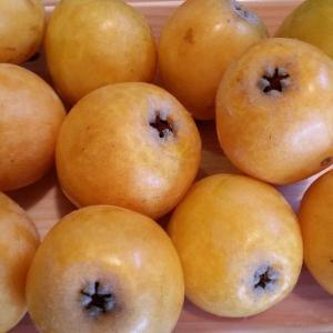 ビワとニンニクの収穫と、マイナンバーの必要性