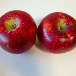 キーウィの追熟にはリンゴ「秋映」と早生玉ねぎの追加定植