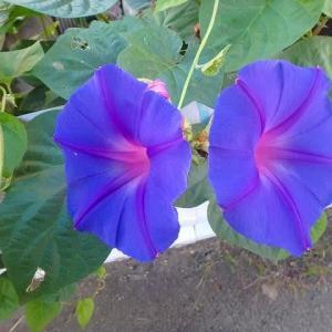 秋分の日の花