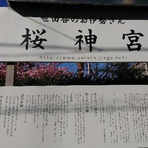 桜神宮の桜満開