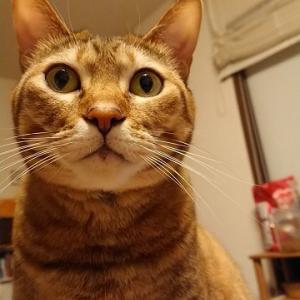 猫の顔が人に見えるとき