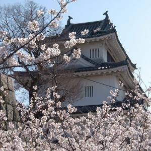 丸亀城で花見