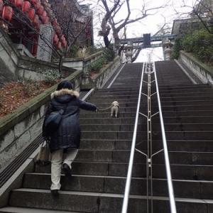 市谷亀岡八幡宮のペット初詣(ご祈祷付)と東京散策withゆかいな仲間たち
