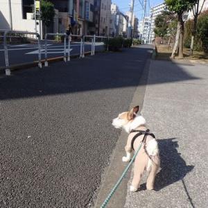 ピース、初めてのドッグドックとわんこが行けるレストラン巡り(新宿区渋谷区)_絶品ローストビーフ