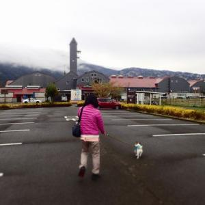 伊豆旅行(いちご三昧とマウンテンドッグラン)とインターペット