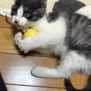 幸せの黄色いボール