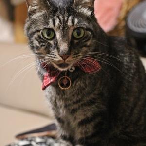 ネコさん用 ペンダントトップ
