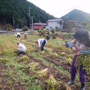 蕎麦の刈り取りへ
