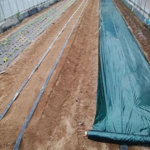 トマトの植付け準備