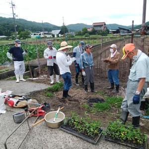 白木農園の作業