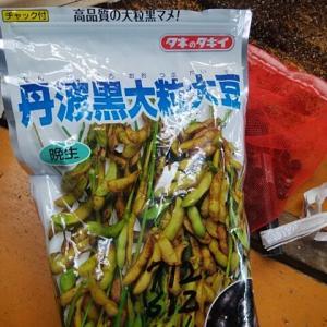 黒大豆の苗つくり