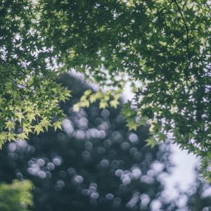 【BRUSHプレミアム会員エリア】今週の琵琶湖@5月30日版