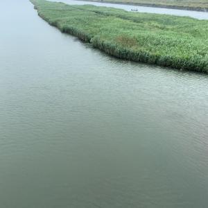 午前11時頃 野洲川の濁りの状況