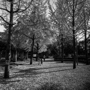 落ち葉の公園で