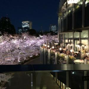 結婚記念と桜満開と講師満開