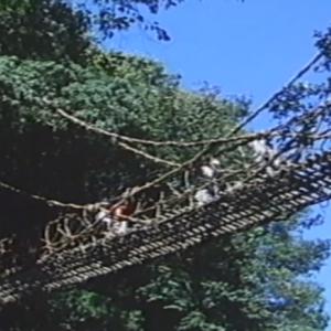 先行配信のお知らせ「祖谷のかずら橋」