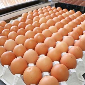 卵料理最高金賞。