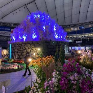 世界らん展2020@東京ドーム
