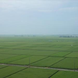 新潟旅行 その1 稲作地帯