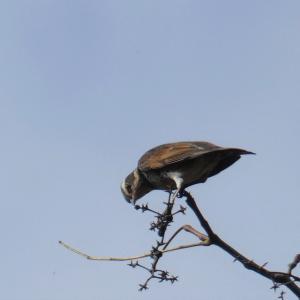 嗚呼~、冬鳥。。。