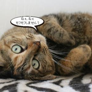 ビビリ猫さんの変化