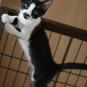 保護仔猫さんお見合いとふにゃふにゃアピール