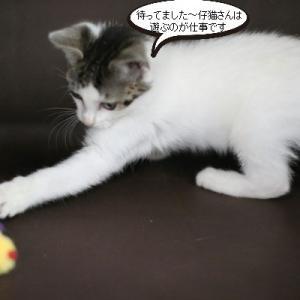 やっぱり仔猫さんは仔猫さん