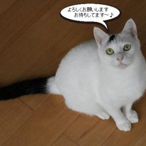 明日は神奈川県動物保護センターにて譲渡会