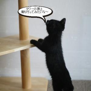 仔猫さん、キャットタワーはまだまだ