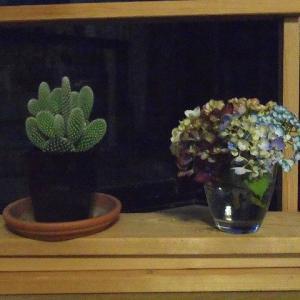 サボテン&紫陽花