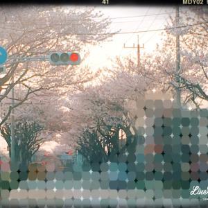 花吹雪〜葉桜へ