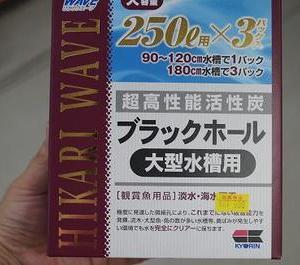 10月5日 観賞魚特売品!