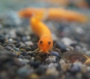 10月25日 Fish 入荷!