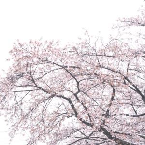 季節外れの雪❄️