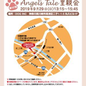 里親会御礼☆横浜市動物愛護センター