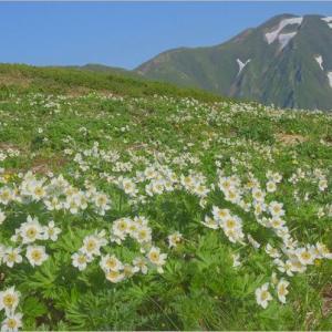 ハクサンイチゲの飯豊連峰(1) 丸森尾根→地神山→頼母木山