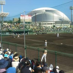 沖縄プロ野球キャンプ始まりますよ~♪