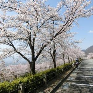 お花見三昧散歩+桃パフェ♪
