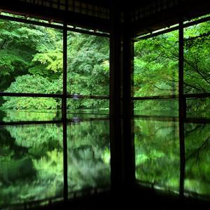 青もみじの「瑠璃光院」春の特別拝観